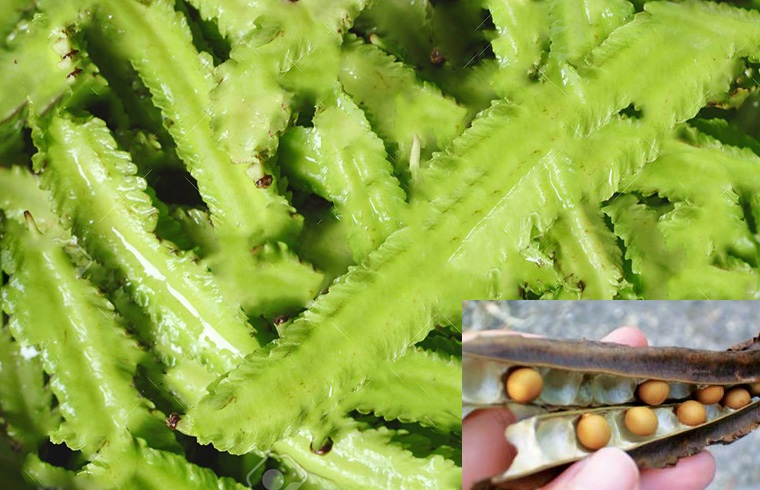 Winged Beans, Mature Seeds: TOP 10 HEALTHY FOODS FOR WOMEN
